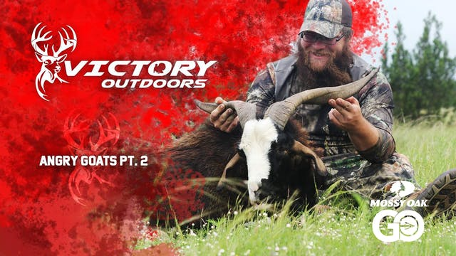 Angry Goats Part 2 • Victory Outdoors