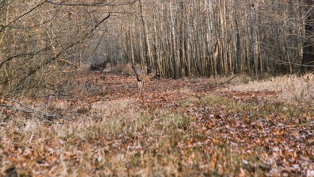 Wright Place, Right Time • Whitetails...