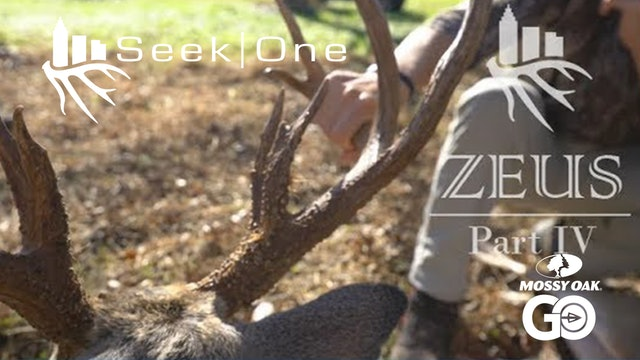 Zeus IV • Seek One