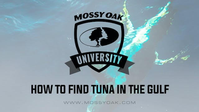 How to Find Tuna in the Gulf of Mexico