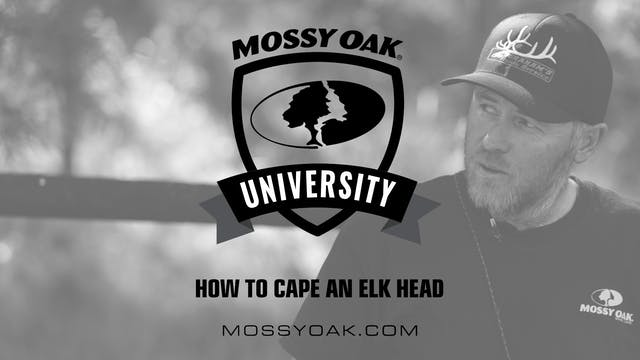 How to Cape an Elk Head