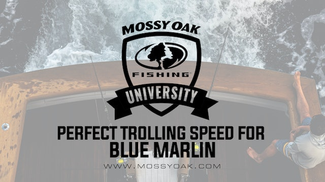 Perfect Trolling Speed for Blue Marlin • Mossy Oak University