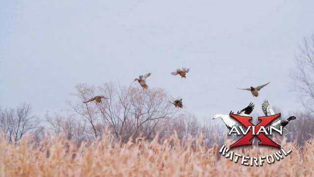 Home • Avian X Waterfowl