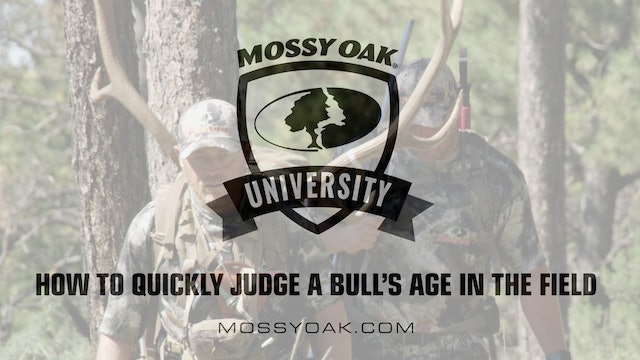 How to Quickly Judge a Bull's Age • Mossy Oak University