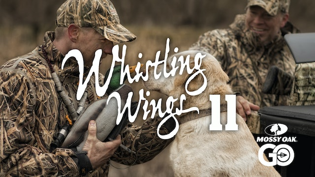 Whistling Wings 11