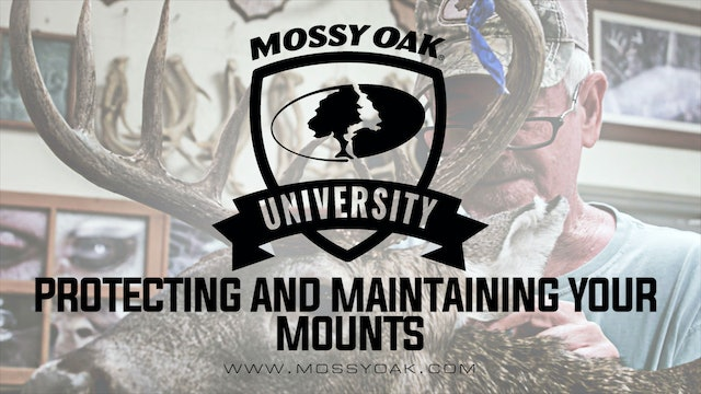 Protecting and Maintaining Your Mounts