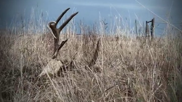 Next of Kin • Archery Whitetails in Texas
