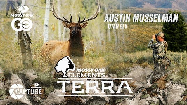 Austin Musselman Utah Elk • Terra