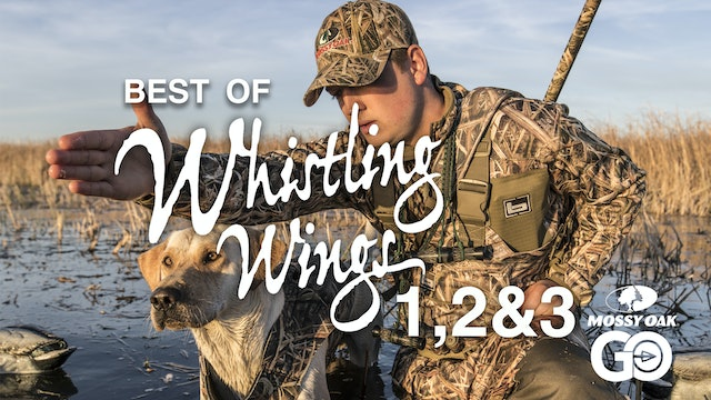 Best of Whistling Wings 123
