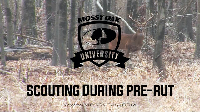 Scouting While Hunting Pre-Rut | Whitetail Hunting Tips