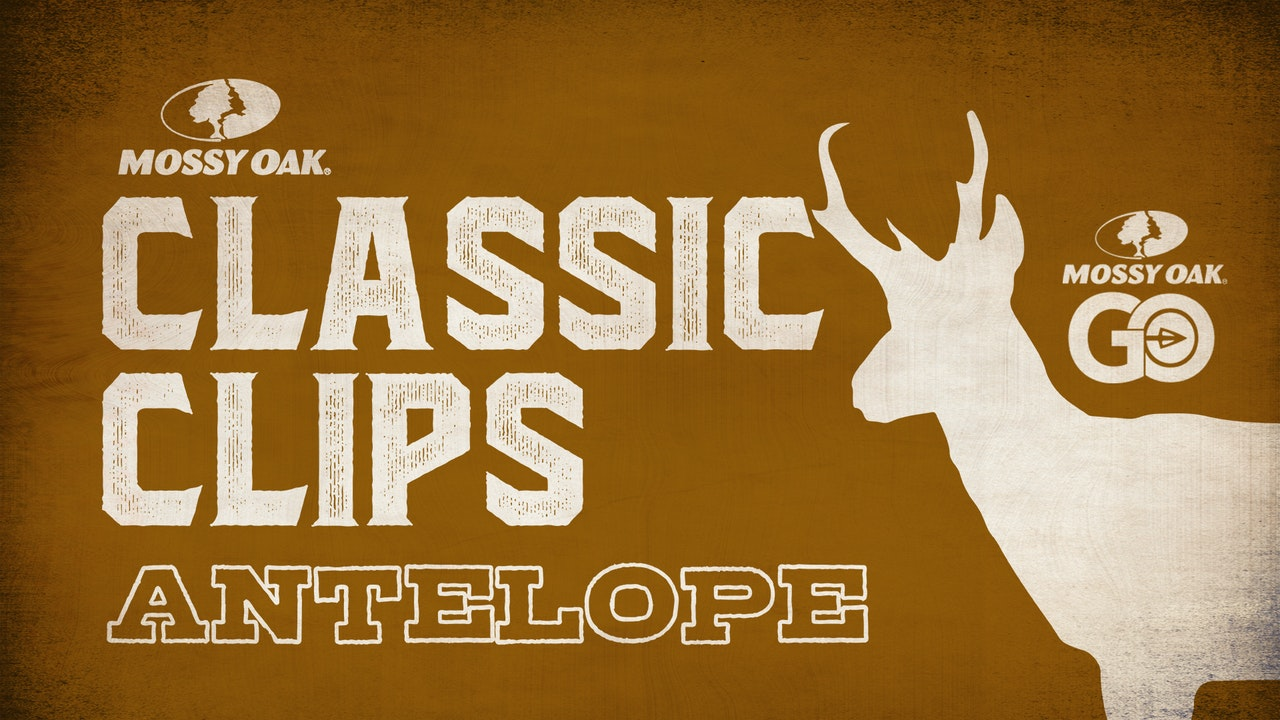 Classic Clips Antelope