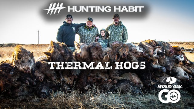 Hunting Habit · Thermal Hogs in Texas