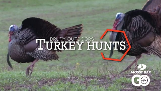 DOD TV • Turkey Hunts
