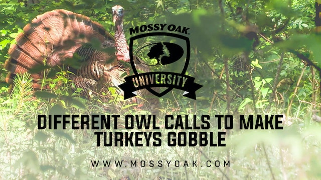 Different Owl Calls to Make a Turkey Gobble