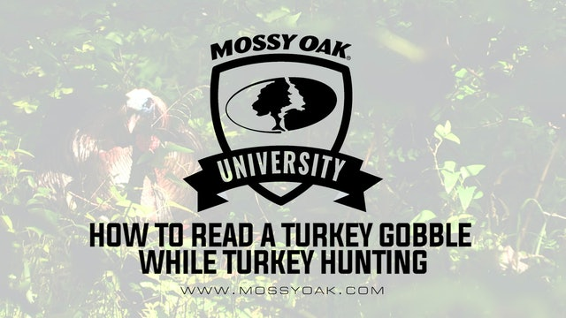 How to Read a Turkeys Gobble