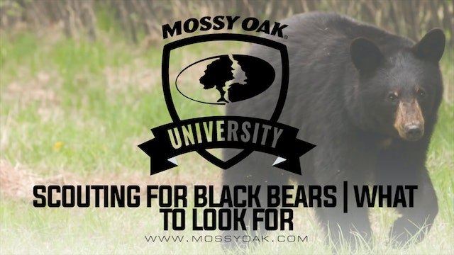 What To Look For When Scouting For Black Bears