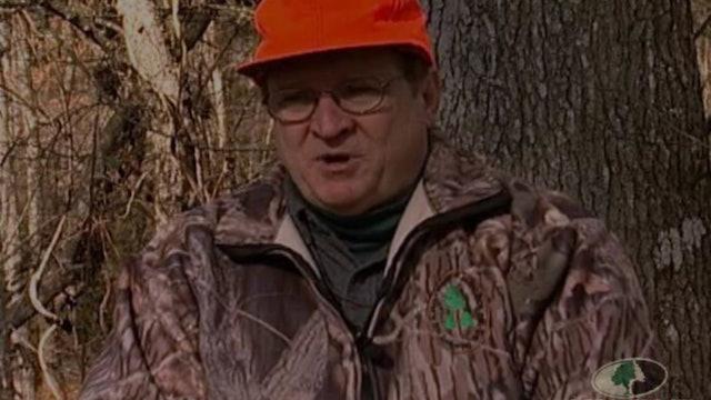 Dixie Deer