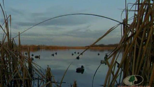 Duck Hunt 6