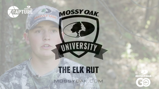 The Elk Rut • Mossy Oak Univeristy