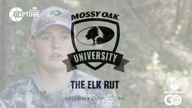 The Elk Rut • Mossy Oak Univeristy
