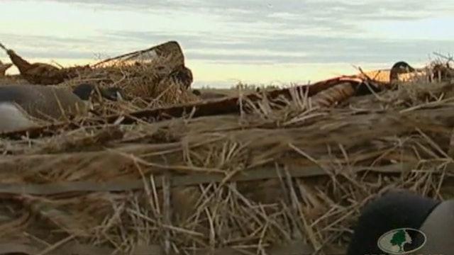 Buck Paradise Goose Hunt 1