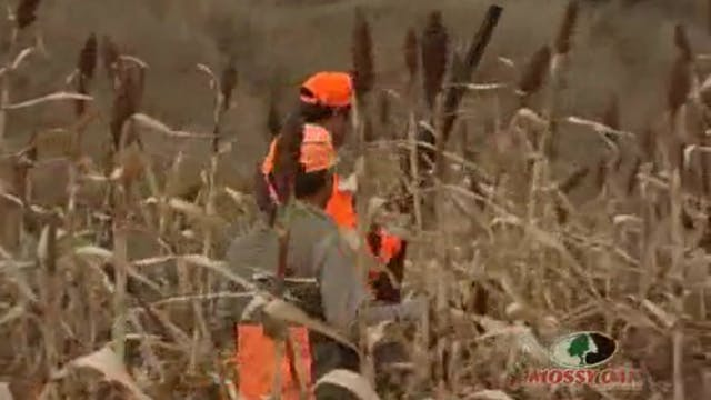 Nebraska Whitetails and Pheasants • H...