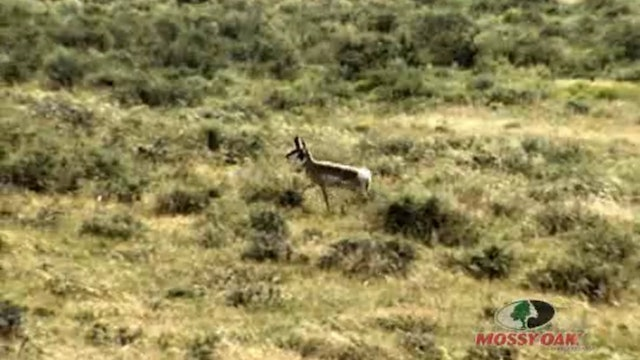 High Plains Pronghorn • Antelope Hunt in Colorado