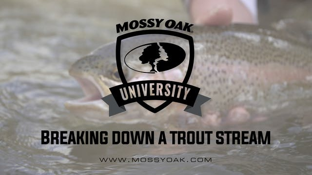 Breaking down a trout stream