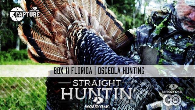 Box 11 Florida • Straight Huntin'