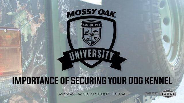 Importance of Securing Your Dog Kennel • Mossy Oak University