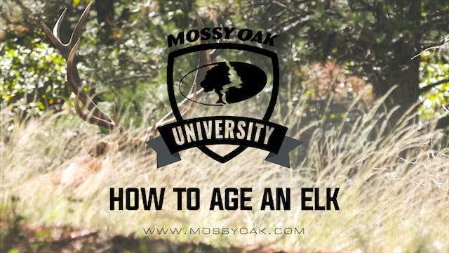 How To Age An Elk