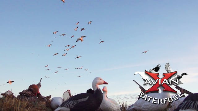 Sask Snow Storm • Avian X Waterfowl