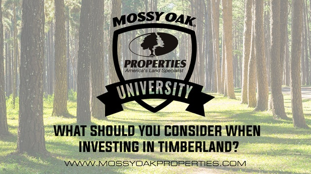 What Should You Consider When Investing In Timberland?