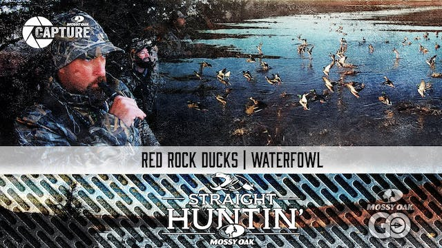 Red Rock Ducks • Straight Huntin'