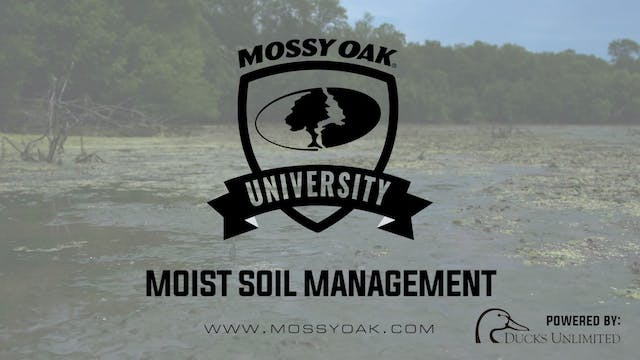 Moist Soil Management for Ducks - Wat...