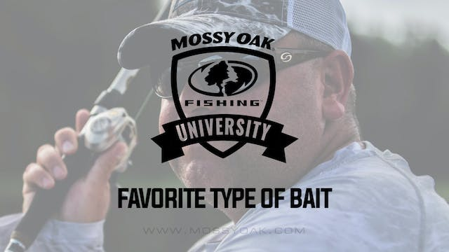 Favorite Bait for Bass Fishing Year R...