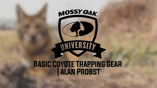 Basic Coyote Trapping Gear with Alan Probst