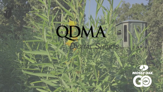 Sunn Hemp Benefits • QDMA Shorts