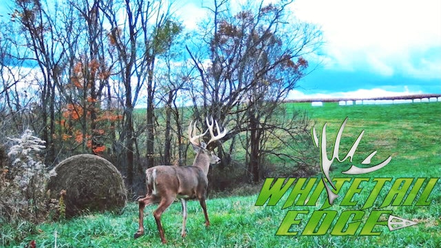 Tempo • Whitetail Edge