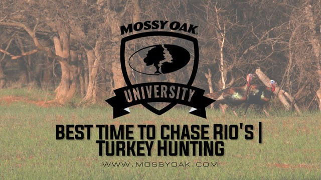 Best Time To Chase Rios | Turkey Hunting