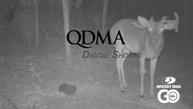 Shooting Based On Age not Antler Shape • QDMA Shorts