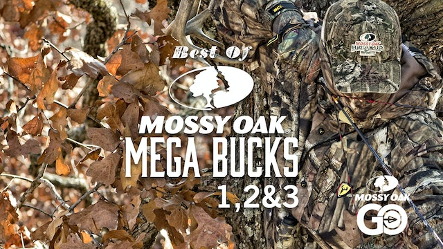 Best of Mega Bucks 123