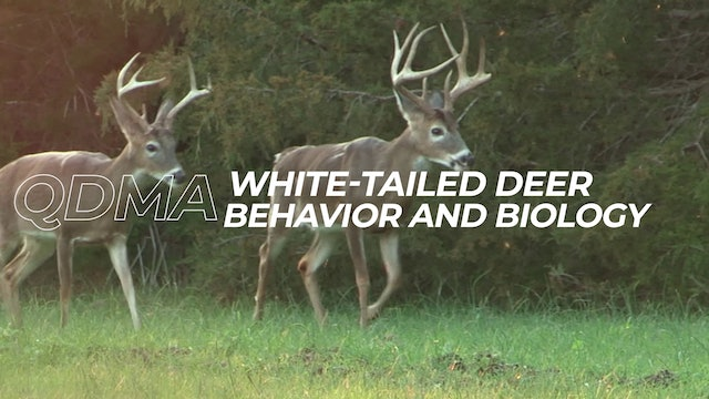 White-Tailed Deer Behavior and Biology