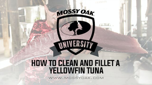 How To Clean and Fillet a Yellowfin Tuna