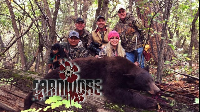 Arizona Bears • Carnivore