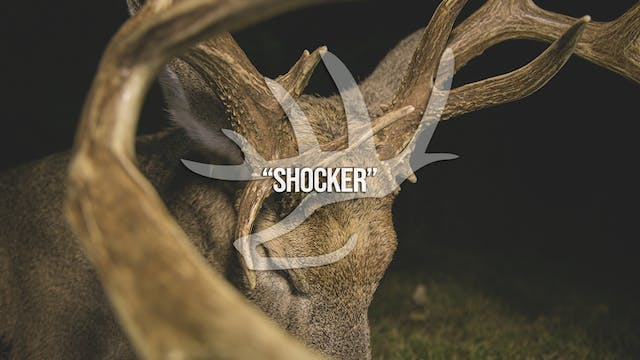 Shocker • Heartland Bowhunter • Behin...