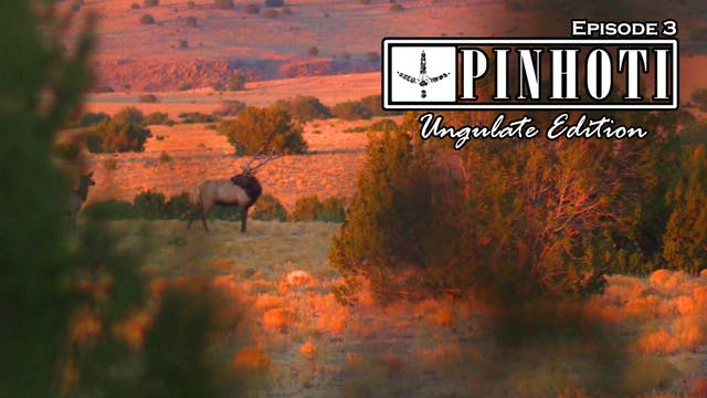 Ungulate Edition Ep3 • Pinhoti Project