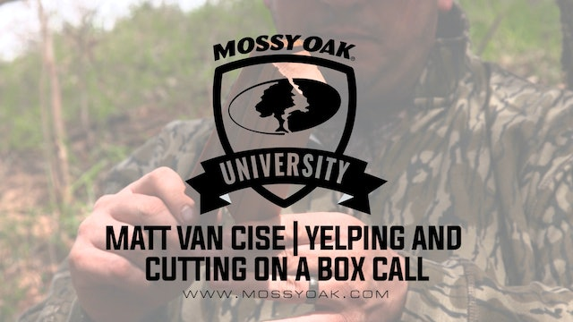 Excited Yelping and Cutting on a Box Call - Matt Van Cise