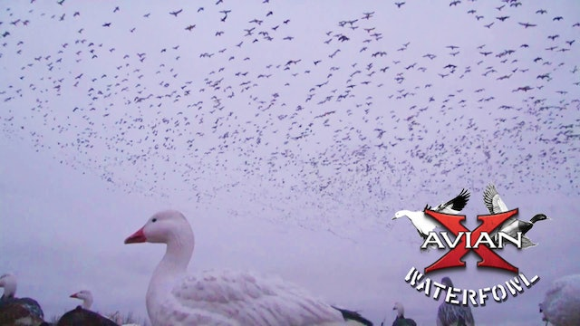 Sleeting Snows • Avian X Waterfowl