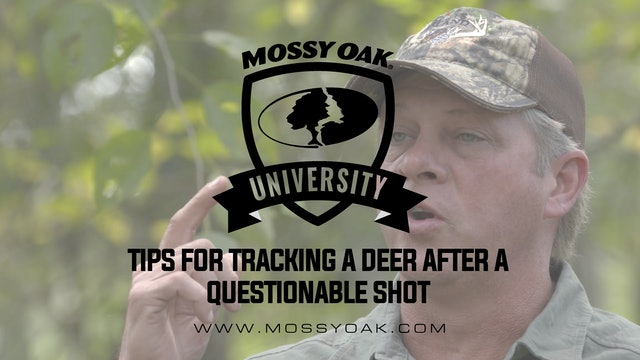Tracking a Deer After a Questionable Shot